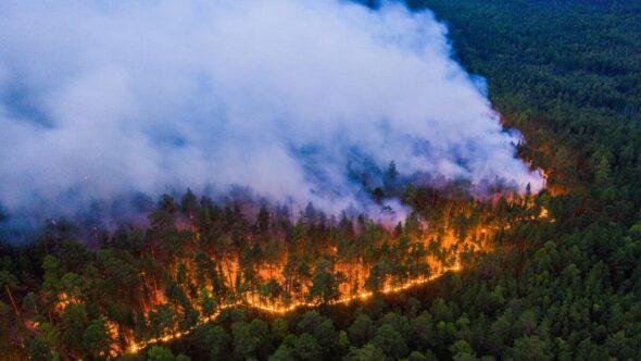 Pożar-Syberii-fot.-Greenpeace.ru_-590×2000